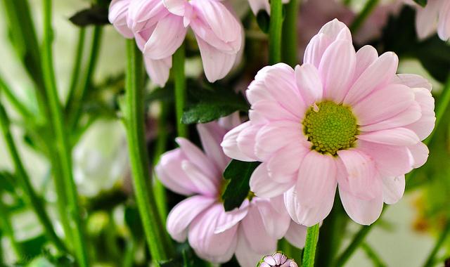 Eljött a virágküldés ideje