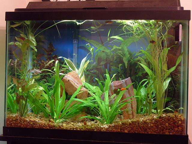Nagyon szép az akvárium világítás LED szalaggal